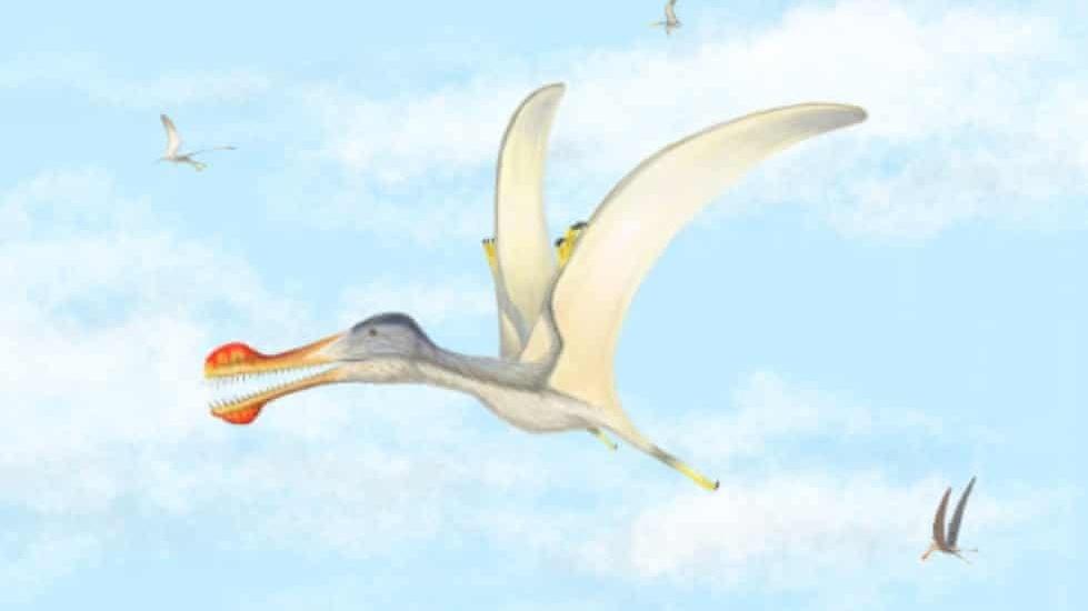 Des reptiles volants vieux de 100 millions d'années découverts dans les zones désertiques du Maroc