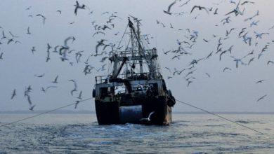 Photo of Trois nouveaux chinois accosteront sur les eaux marocaines avec comme activité principale la pêche. La société publique de pêche «Shandong Provincial Distant Water Fishing Co» se chargera de son exploitation.