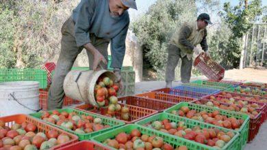 Photo de Le Maroc a exporté 474900 tonnes de fruits et légumes jusqu'en janvier 2021. C'est ce qu'a affirmé le ministre de l'Agriculture, Aziz Akhannouch, lundi à Rabat. Tout en se félicitant de cette augmentation comparativement à la précédente saison, il a mis l'accent sur les mesures qui y ont contribué.