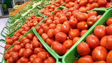 Photo de Dans une question écrite au gouvernement, Clara Aguilera (parti socialiste espagnol)  exhorte la Commission européenne à revoir le système de calcul de la valeur globale des importations à un taux forfaitaire, afin de réduire la quantité de tomates marocaines entrant sur le marché européen.